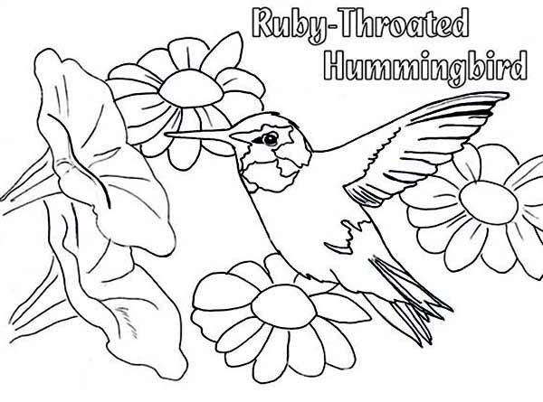 Ruby Throated Hummingbird Coloring Pages To Print