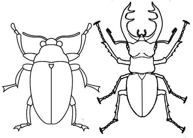 Scarab And Stag Beetle Coloring Page