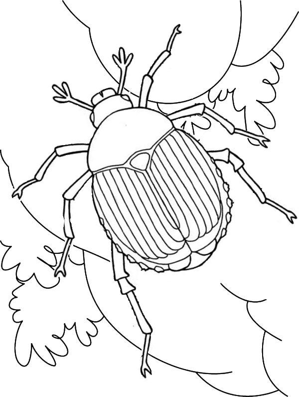 Scarab Beetle Coloring Page For Insect Lovers