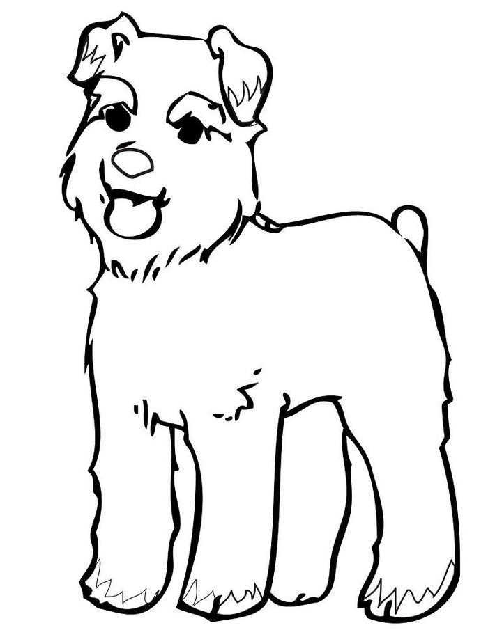 Schnauzer Dog Coloring Pages