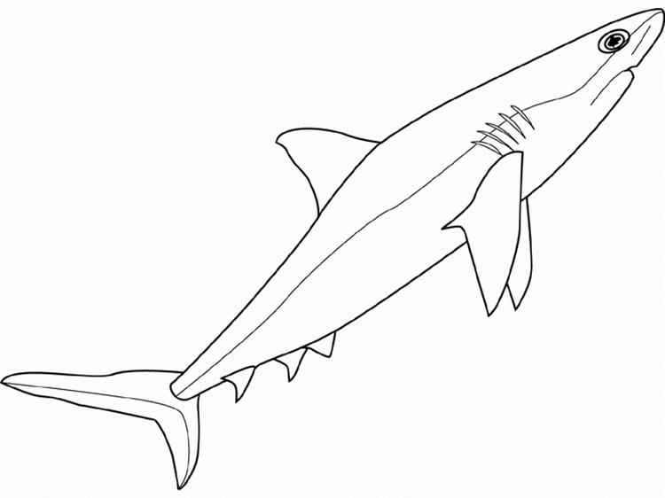 Sea Animals Shark Coloring Pages