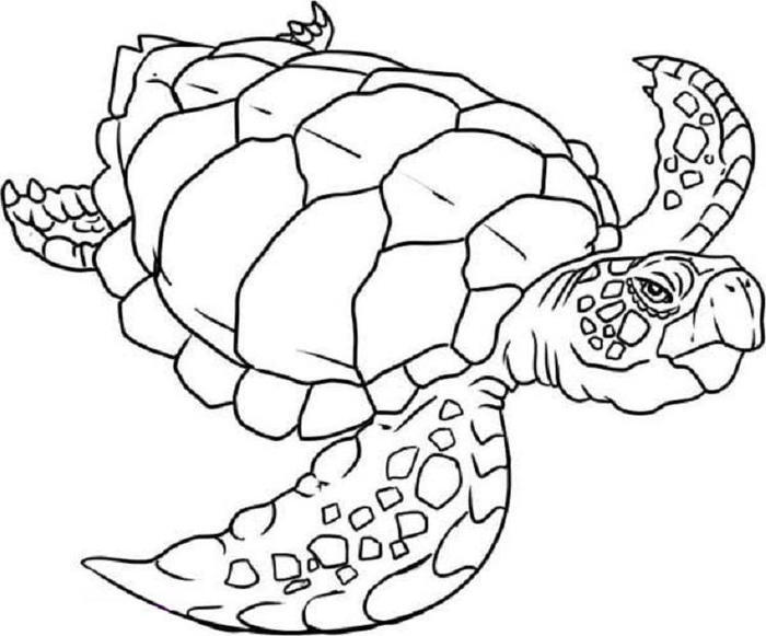 Sea Coloring Pages Turtle