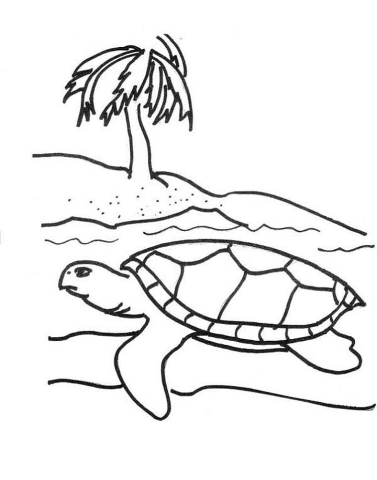 Sea Turtle Coloring Page Free
