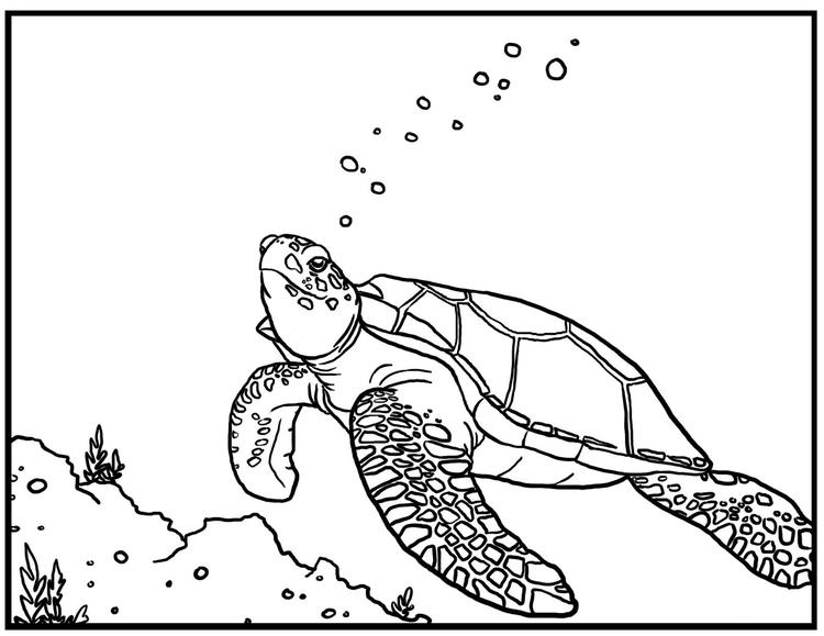 Sea Turtle Coloring Pages Swimming Underwater