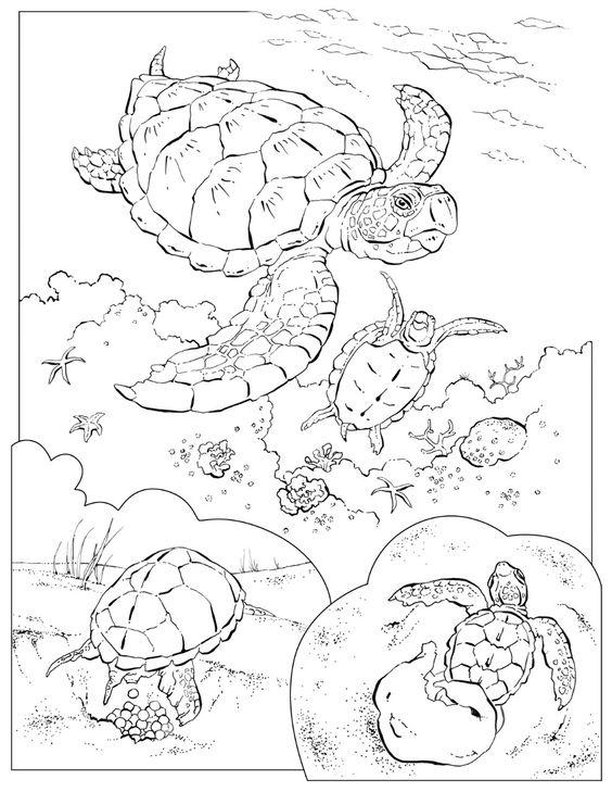 Sea Turtle Coloring Pages Underwater Life