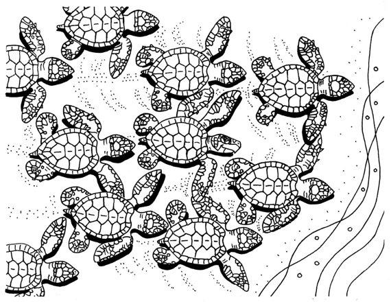 Sea Turtle Hatchlings Coloring Pages