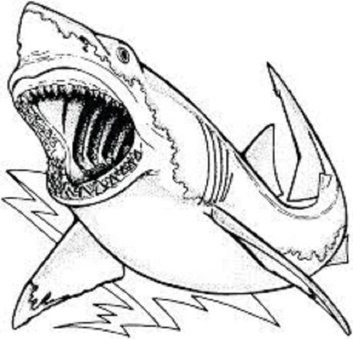 Shark Coloring Pages Pdf