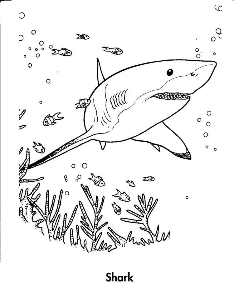 Shark Coloring Pages Sea Animals
