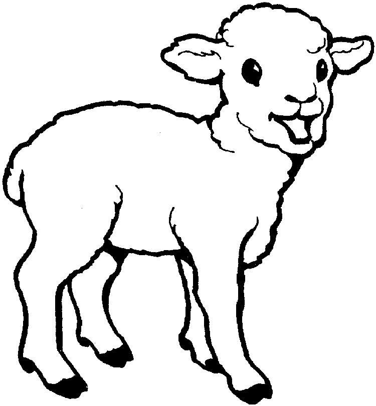 Sheep Coloring Pages Baby