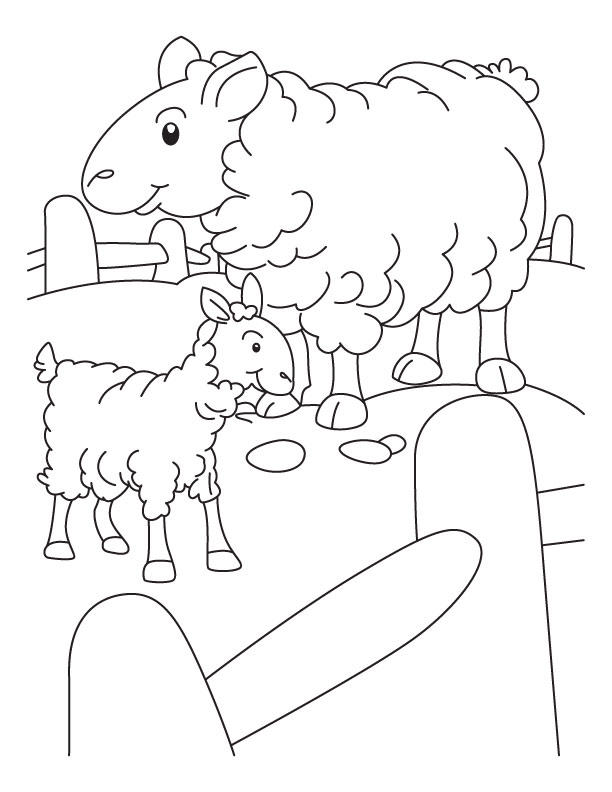 Sheep Coloring Pages For Kindergarten