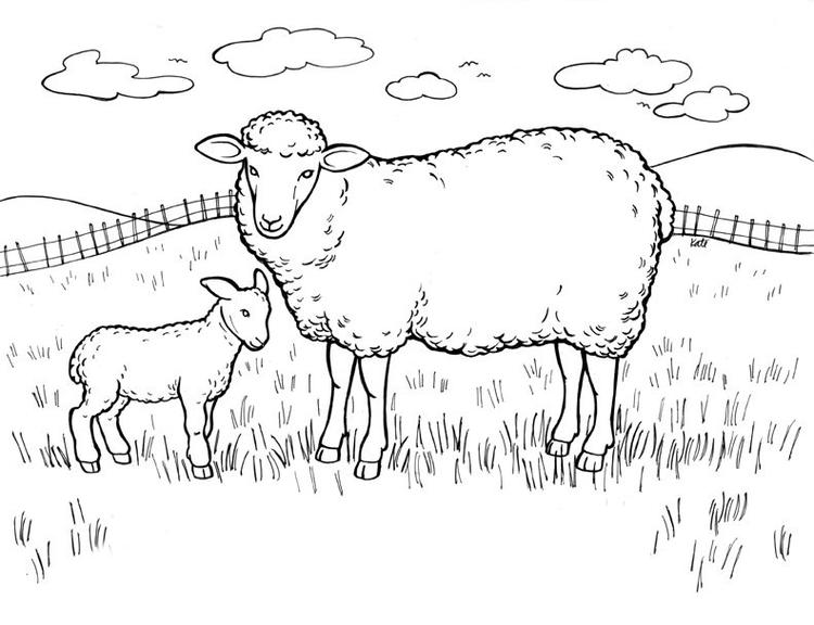 Sheep Coloring Pages In Field