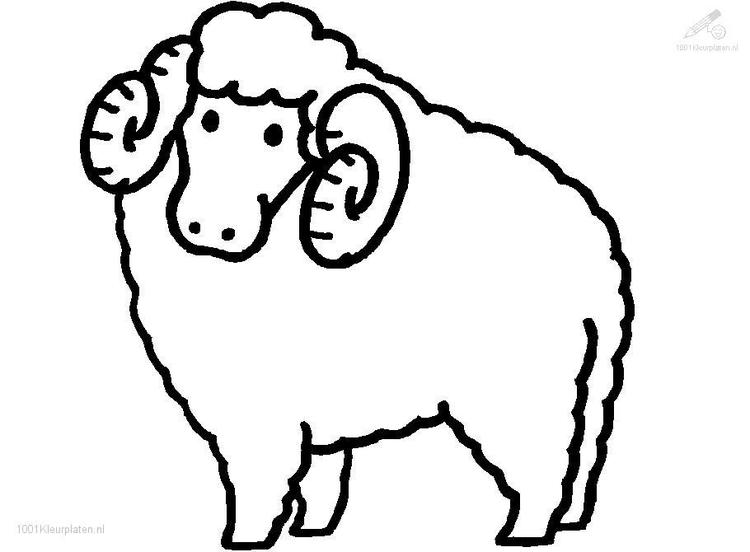 Sheep Coloring Pages With Horns