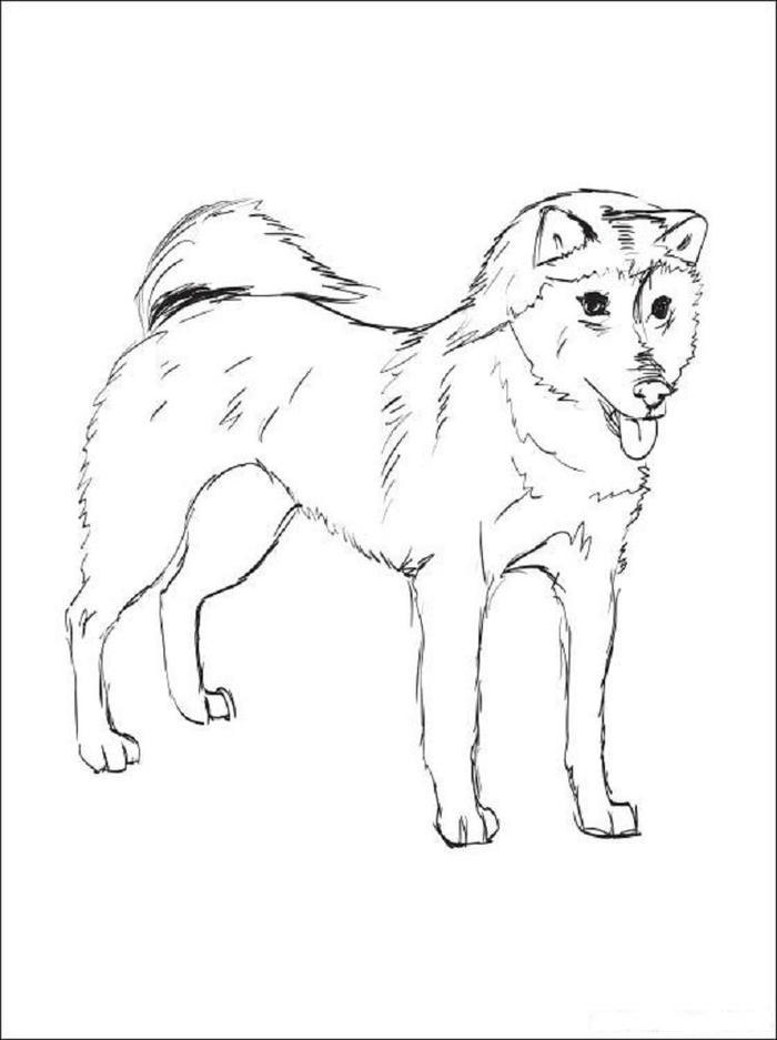 Shiba Inu Dog Coloring Pages