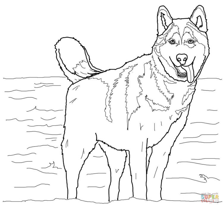 Siberian Husky Coloring Pages For Child