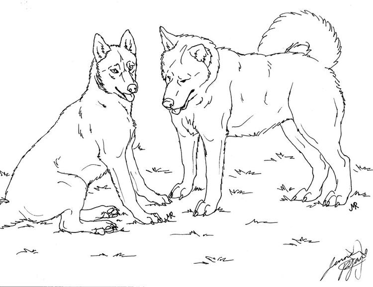 Siberian Husky Coloring Pages To Print Out