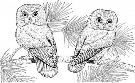Simple Adult Coloring Pages Printable Owl