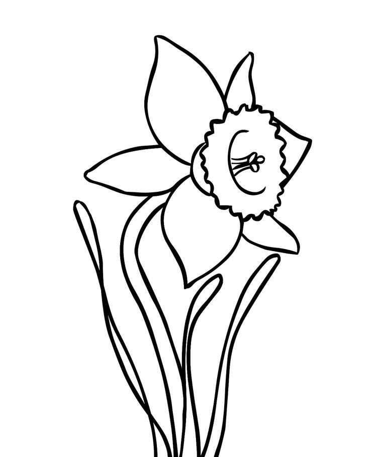 Simple Daffodil Flower Coloring Page