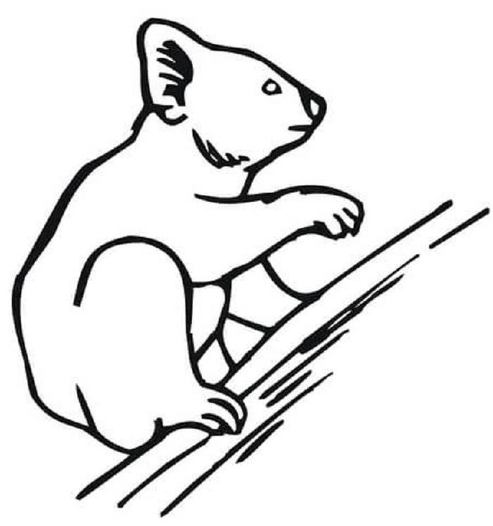 Simple Koala Coloring Pages