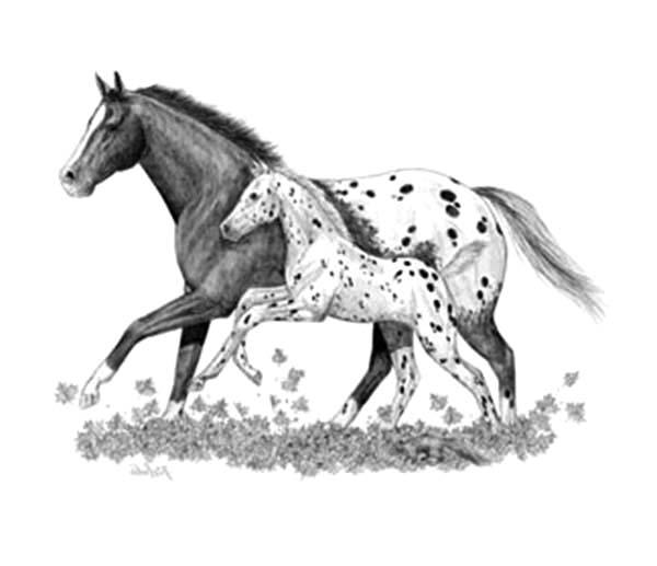 Sketch Of Appalooshorse Coloring Pages