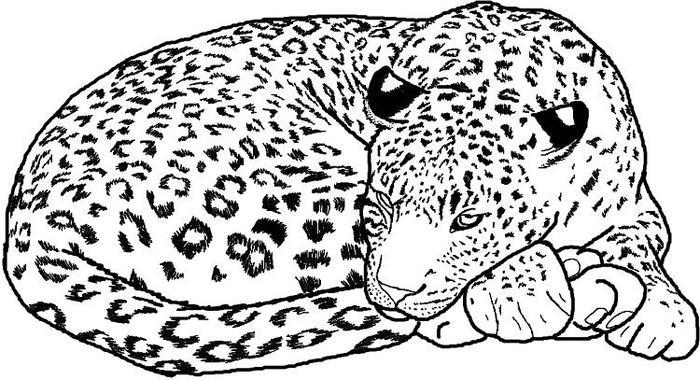 Sleeping Jaguar Coloring Pages