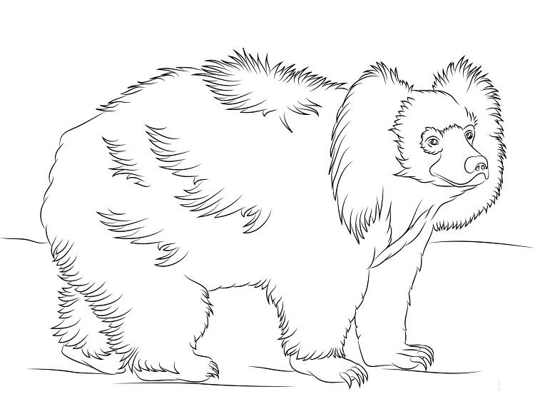 Sloth Bear Coloring Pages