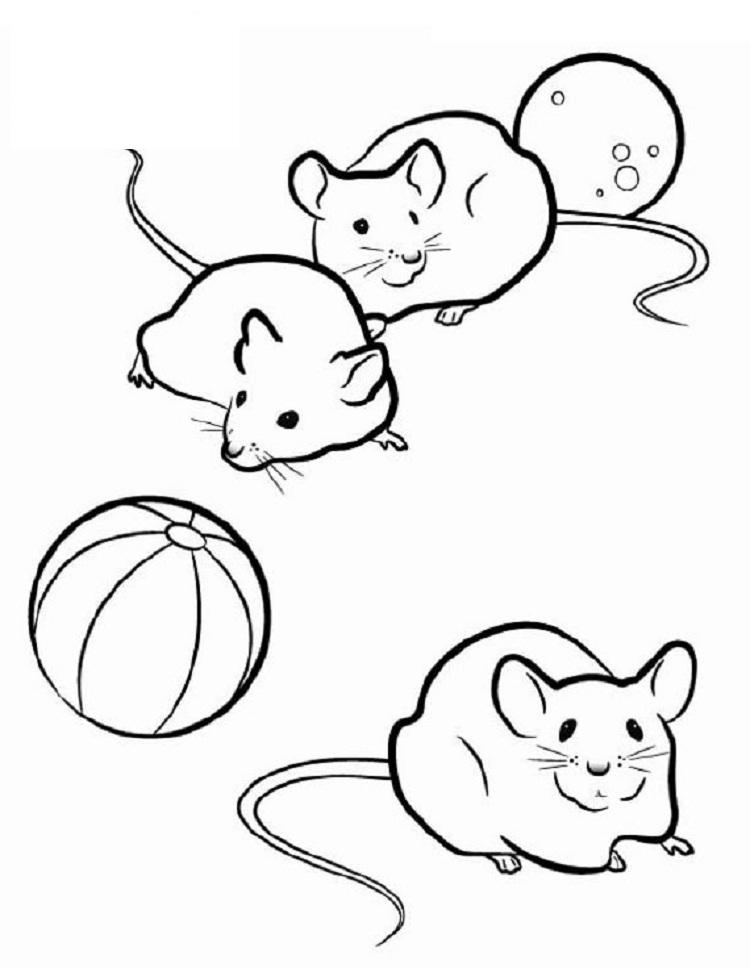 Small Animal Coloring Pages