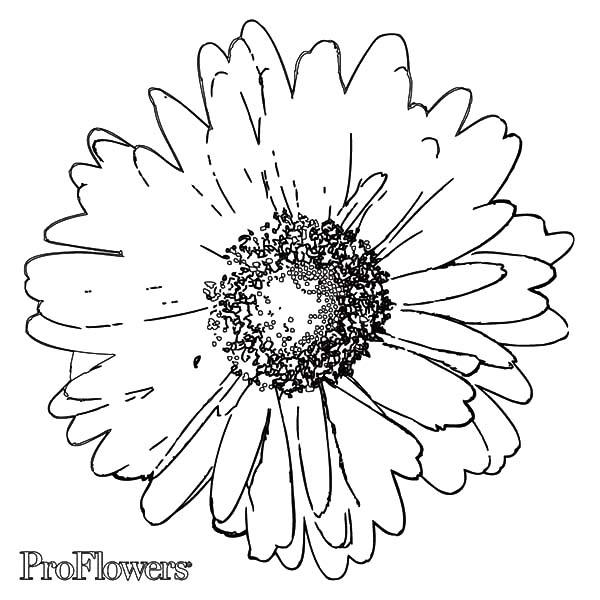 Smell Good Aster Flower Coloring Pages