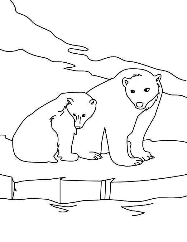 image regarding Polar Bear Printable known as Snow Polar Go through Coloring Web pages Printable - Coloring Recommendations