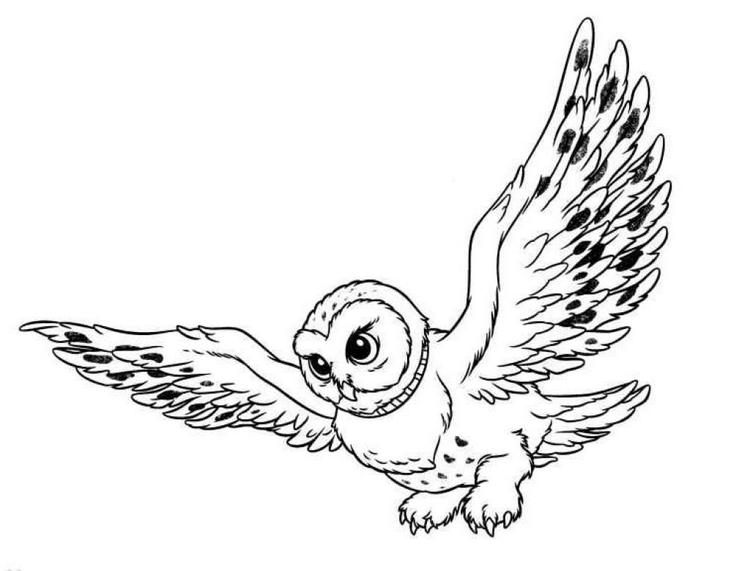 Snowy Owl Coloring Pages For Kids