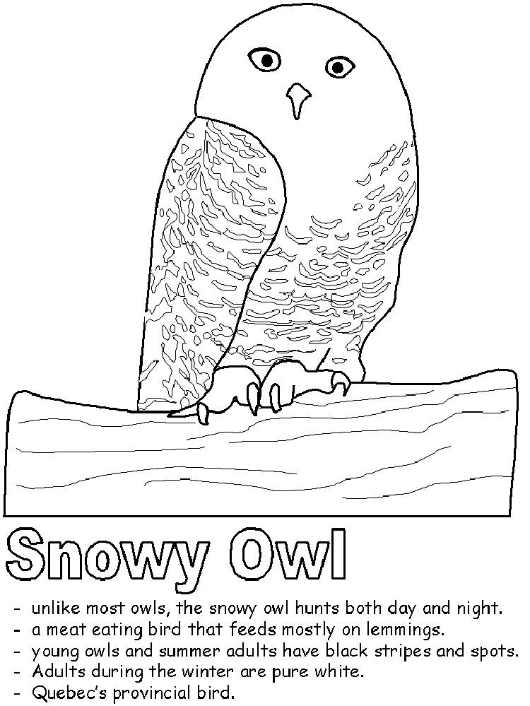 Snowy Owl Coloring Pages