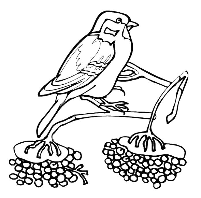 Sparrow Bird Winter Animal Coloring Pages