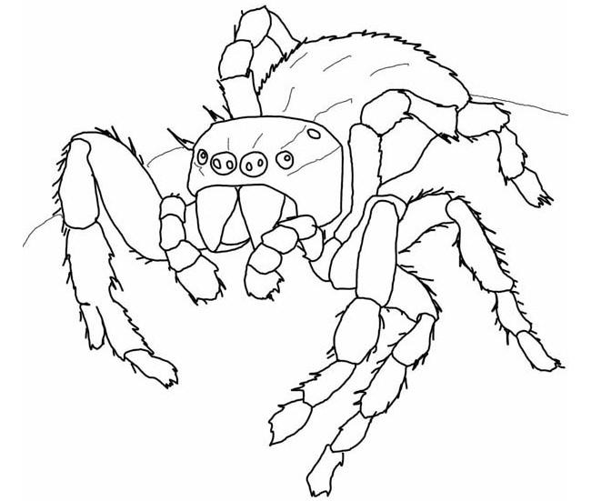 Spider Coloring Pages For Kids Printable