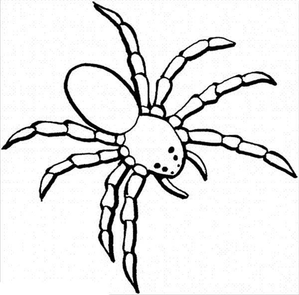 Spider Coloring Pages For Kids
