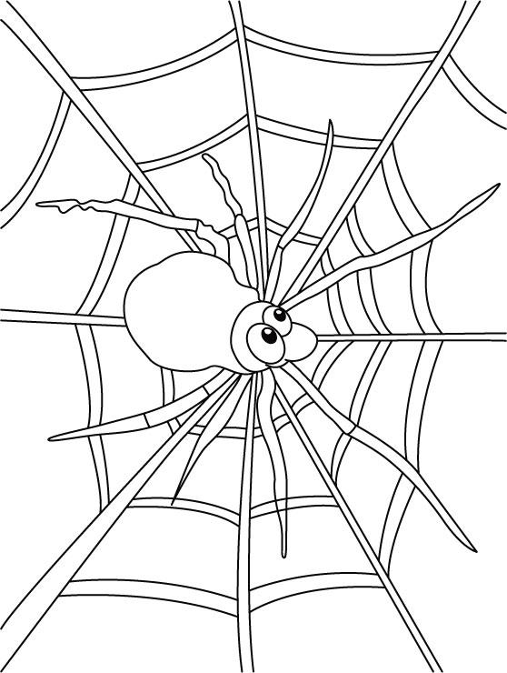 Spider On Web Coloring Pages