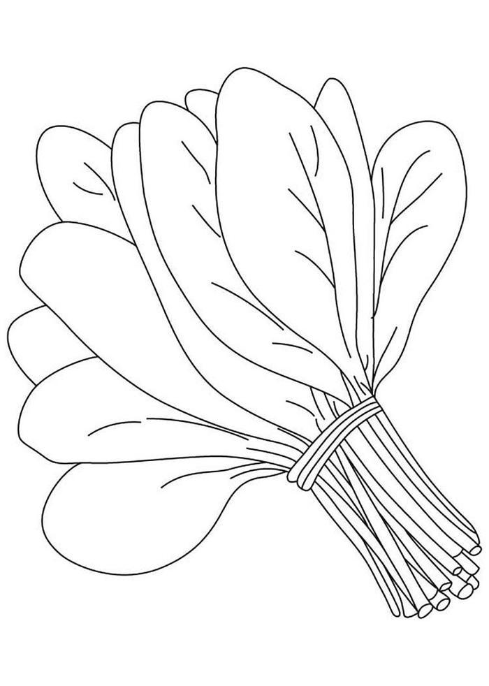 Spinach Vegetables Coloring Pages