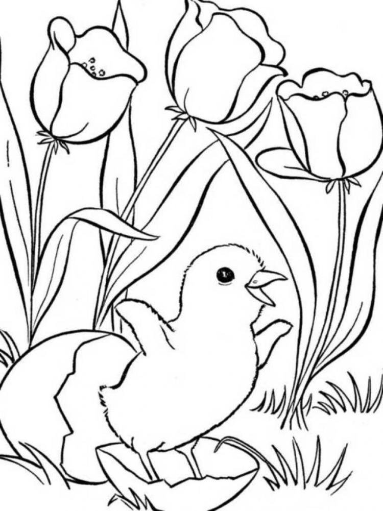 Spring Coloring Pages Chicks And Tulips