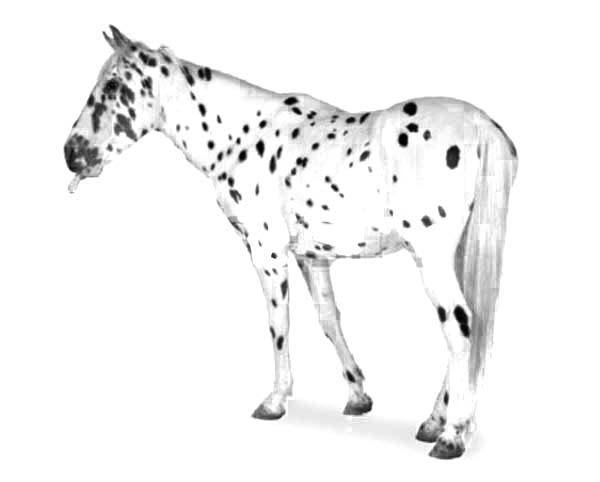 Striped Hooves Appalooshorse Coloring Pages