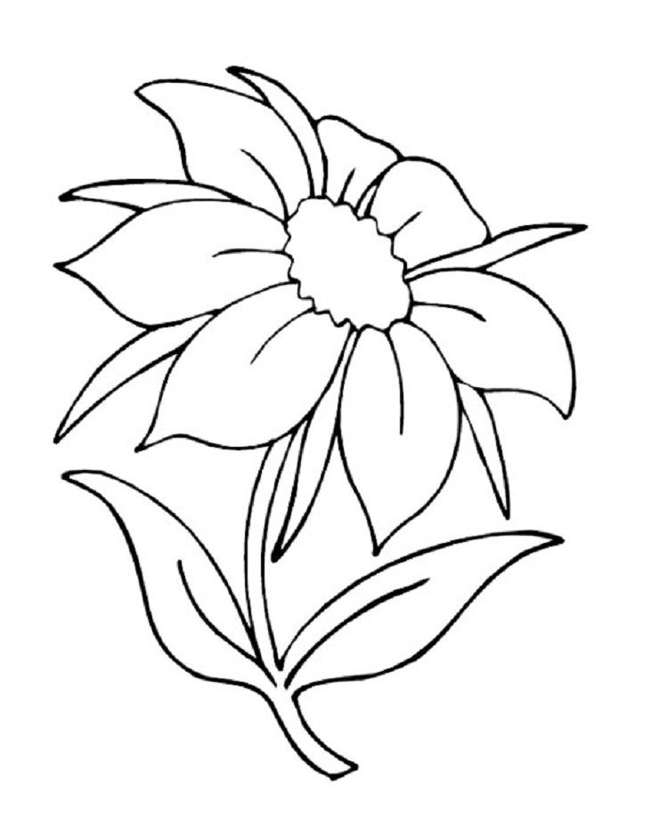 Summer Flower Coloring Pages