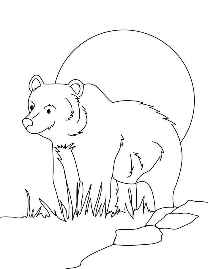 Sun Bear Coloring Pages