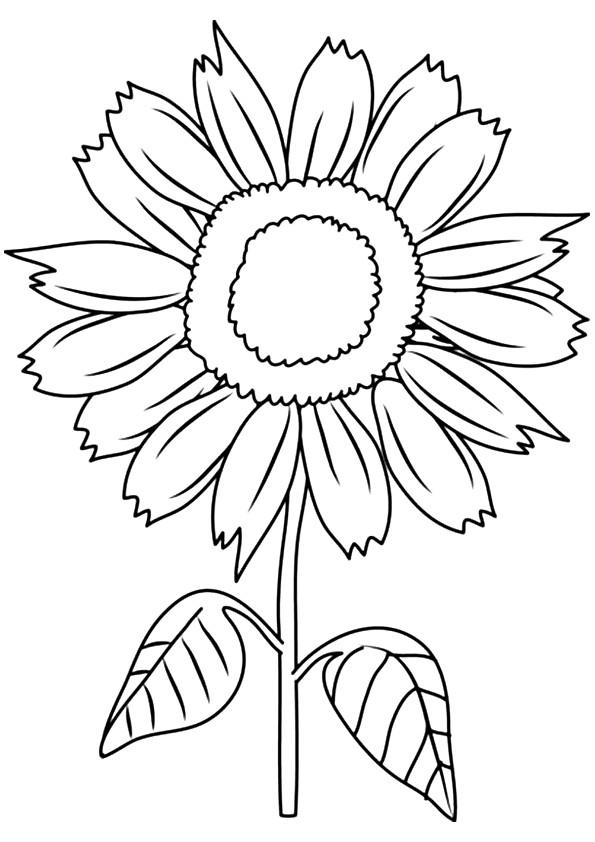 Sunflower Coloring Pages For Kids Printable
