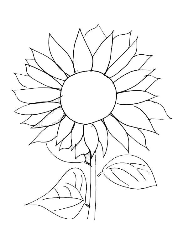 Sunflower Coloring Pages Free Printable