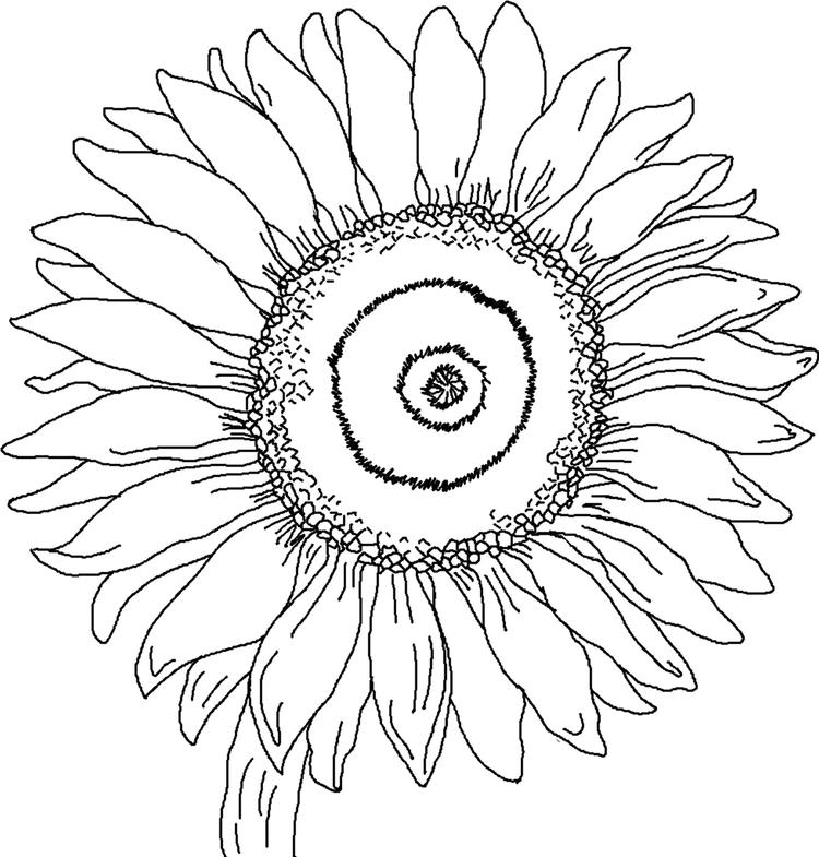 Sunflower Coloring Pages Petals