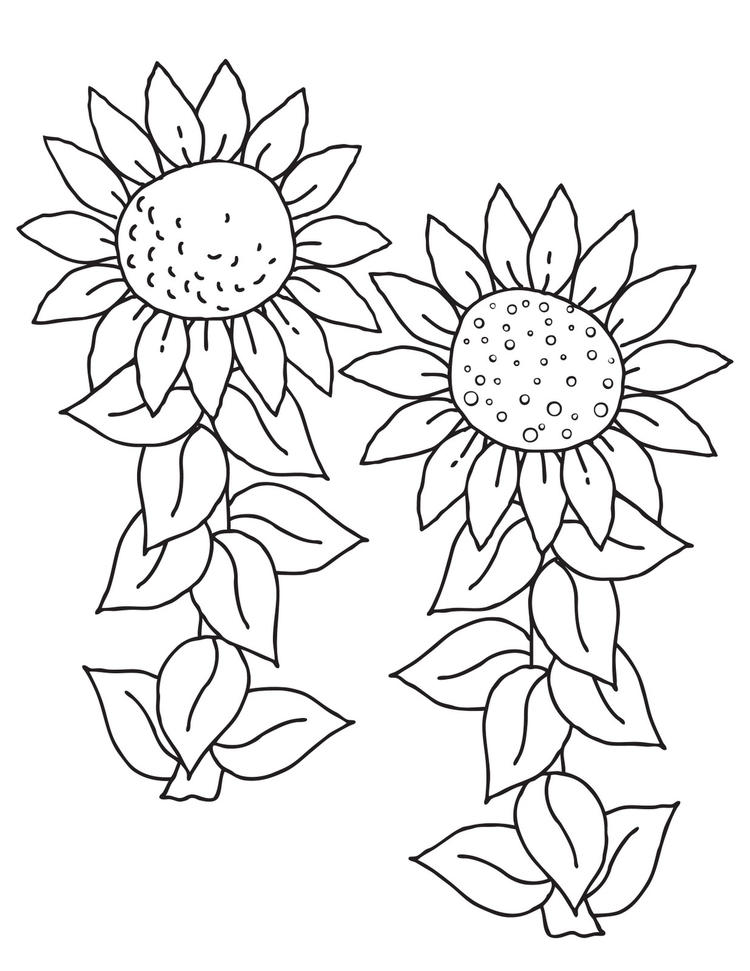 Sunflower Coloring Pages Two Sunflowers