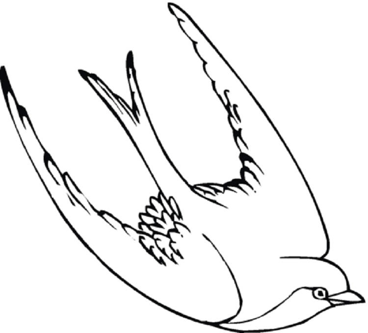Swallow Bird Coloring Pages