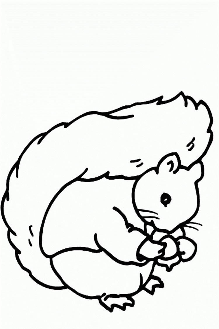 Sweet Squirrel Coloring Pages