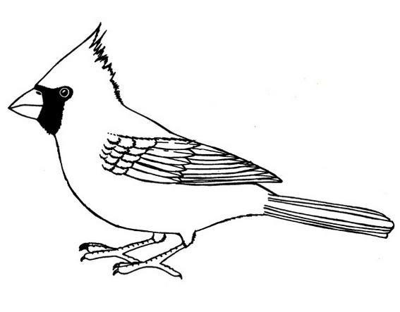 The Gallery Of Red Crested Cardinal Coloring Page