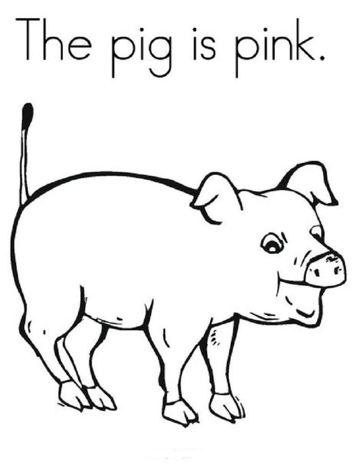 The Pig Is Pink Coloring Pages