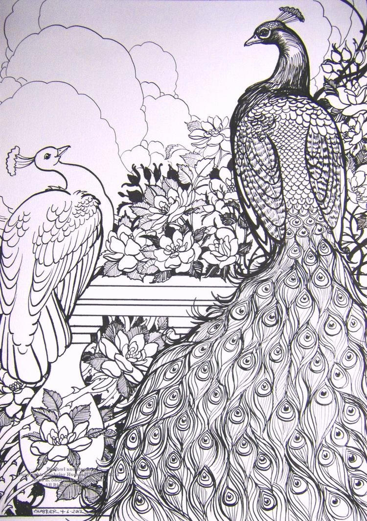 The Beautiful Peacock Coloring Pages