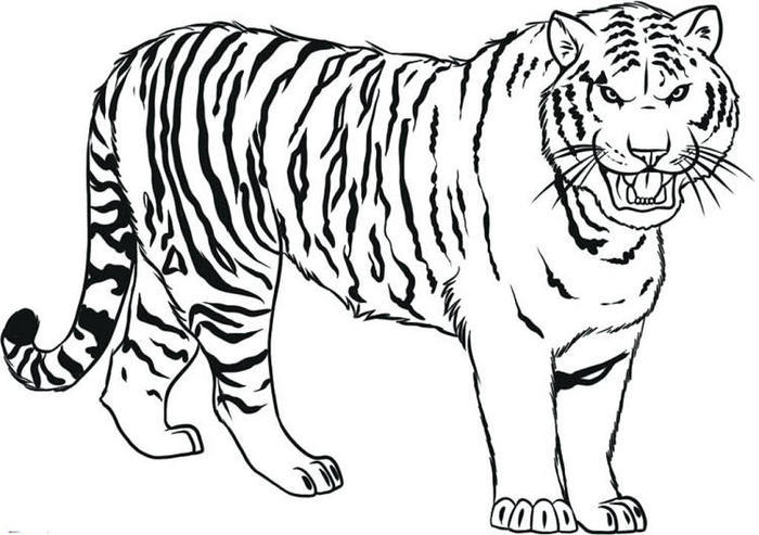 Tiger Coloring Pages Free