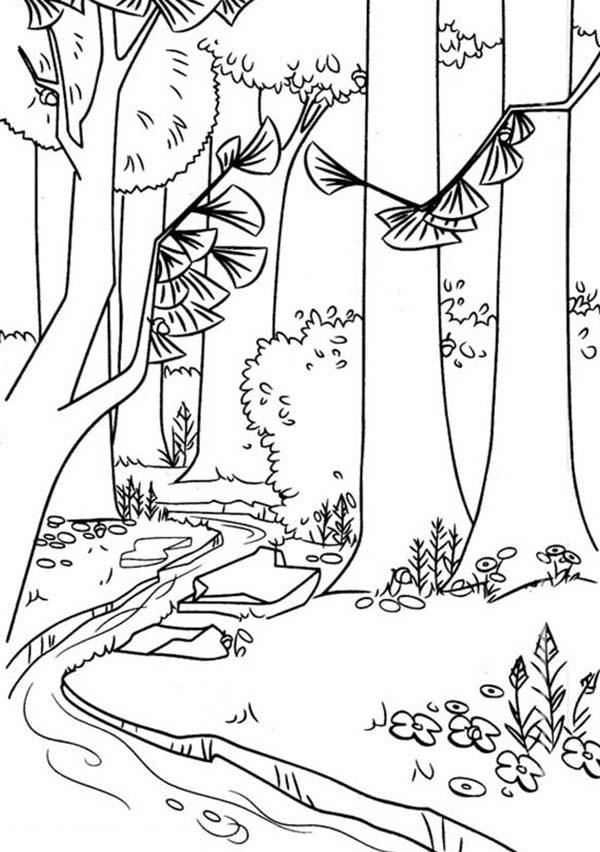 Timber National Forest In Open Season Coloring Pages